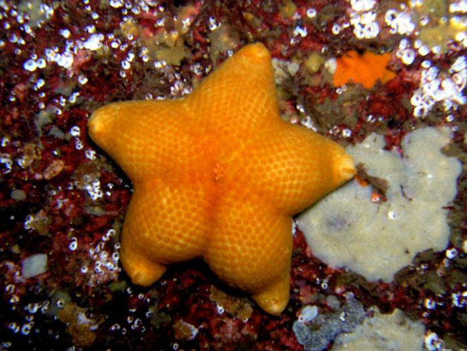 The hottest starfish ever.