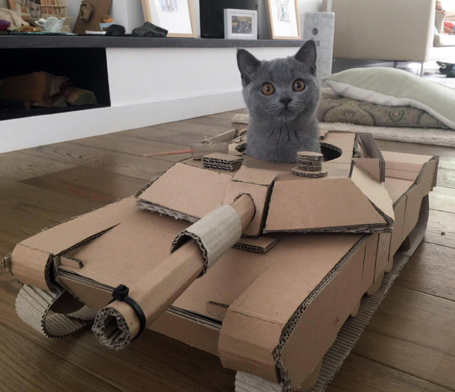 This cat is ready for battle!