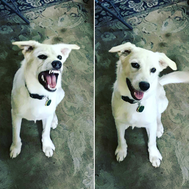 Before and after being told he's a good boy.