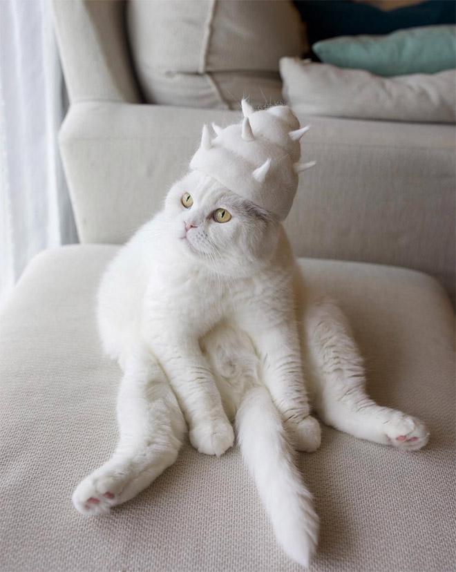 Cat fur art by Ryo Yamazaki.