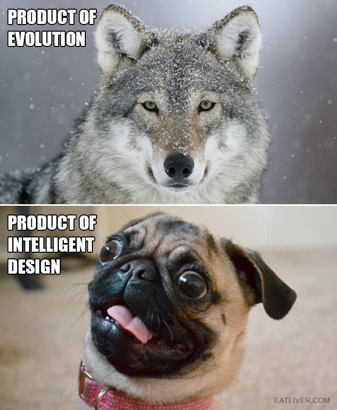 Wolf vs. dog.