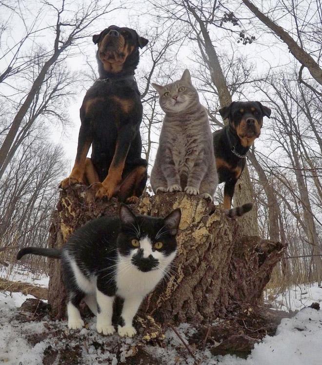 Cool animal band music album cover.