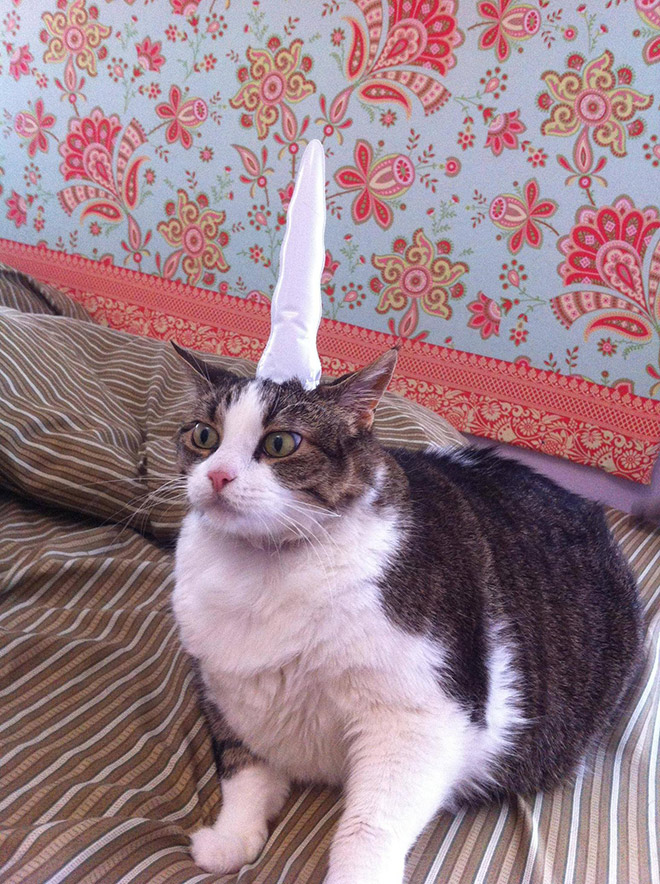 Inflatable unicorn hor for cats.