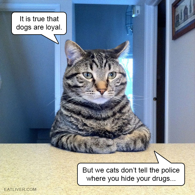 It's true that dogs are loyal but we cats don't tell the police where you hide your drugs.
