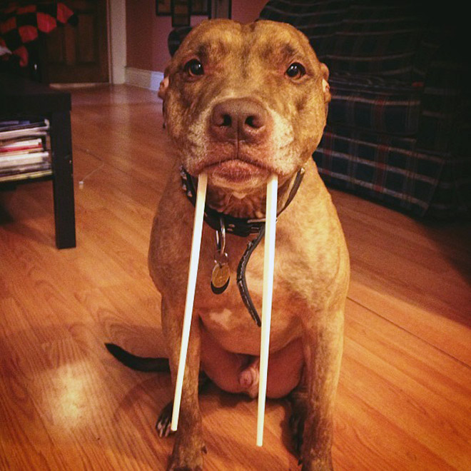 Meet the walrus dog!
