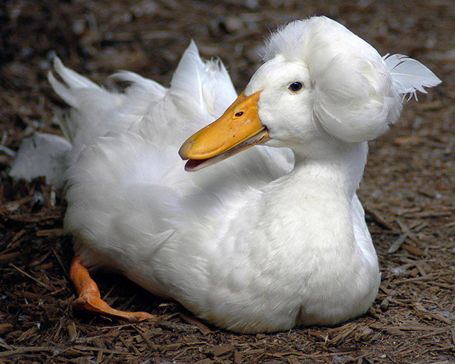 Epic duck hair is epic.