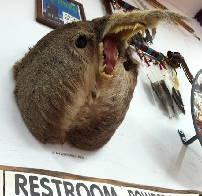Deer butt taxidermy sasquatch.