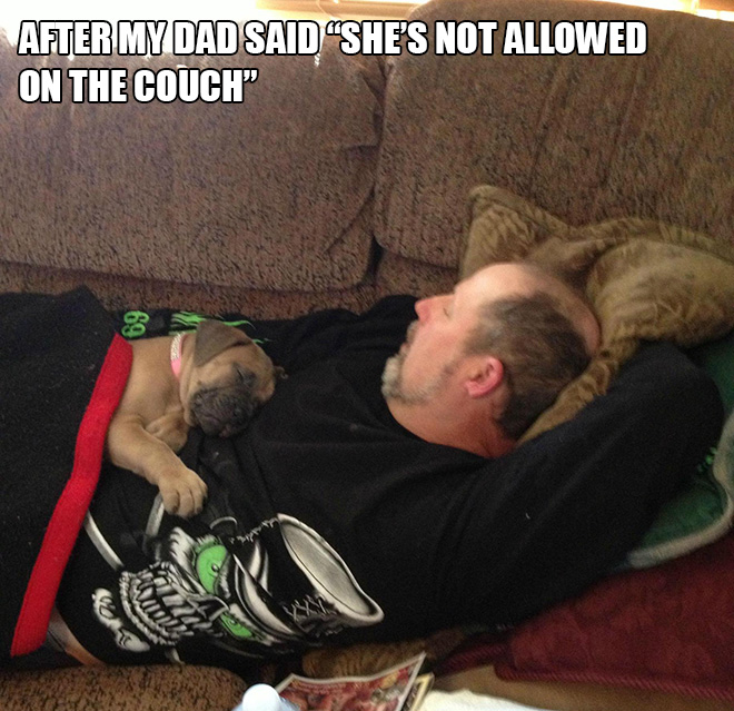 Dad vs. dog.