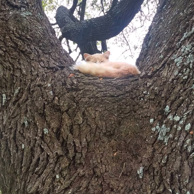 Cat ripening in a tree.