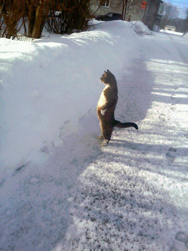 Penguin cat.