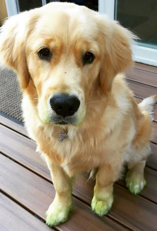 After playing in freshly cut grass.