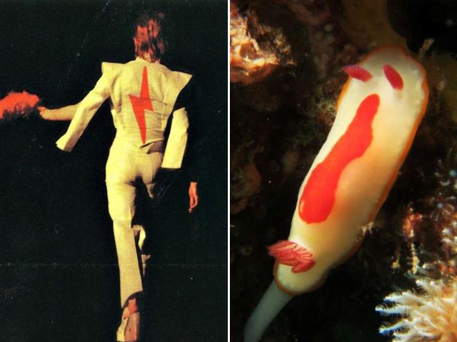 Proof that David Bowie looks like a sea slug.