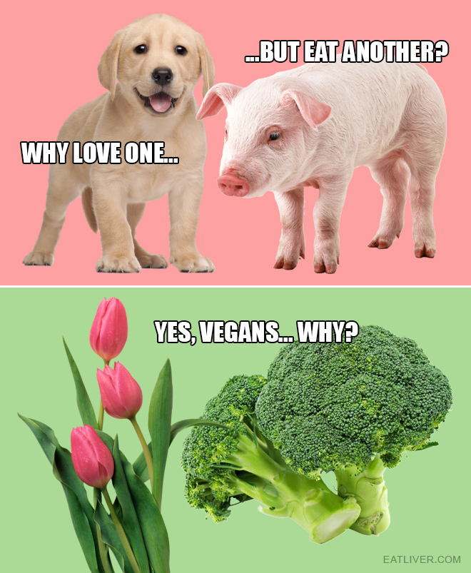 Yes, vegans... Why?