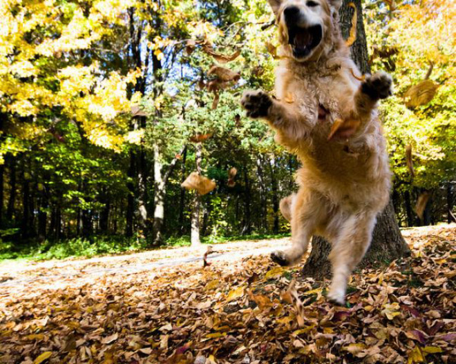 Some dogs really love Autumn leaves.
