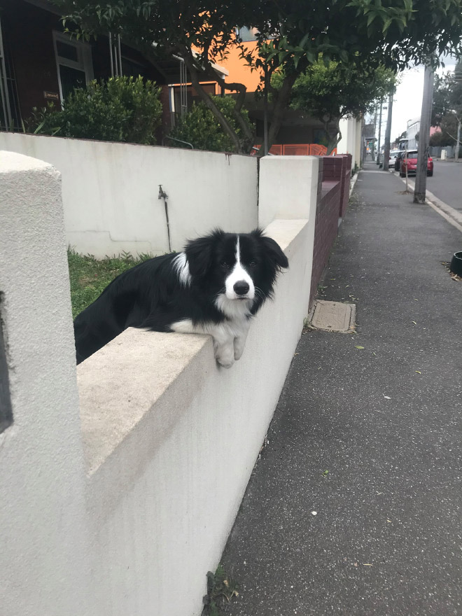 Dog spotted in the wild.