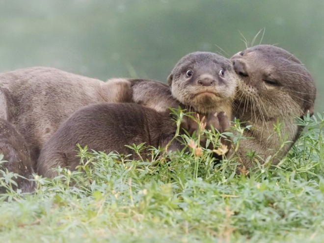 Funny pic from Comedy Wildlife Photography Awards 2020 finalist list.