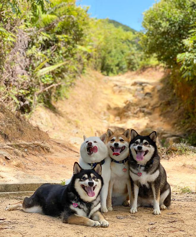 Funny photobombing dog.