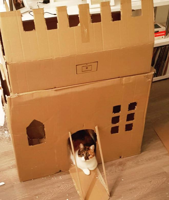 Cardboard cat castle.