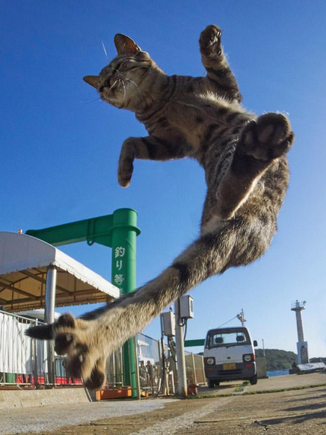 Ninja cat.