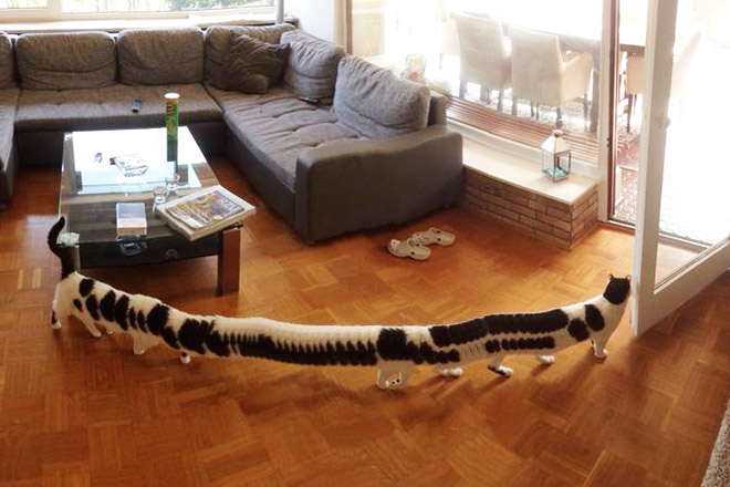 Cat panorama photo gone wrong.
