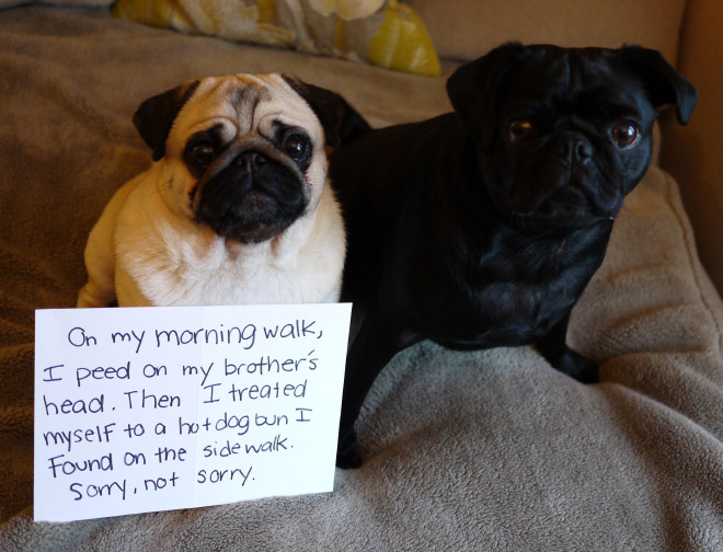 Dog shaming is always funny.