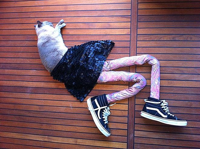Cat in tights.