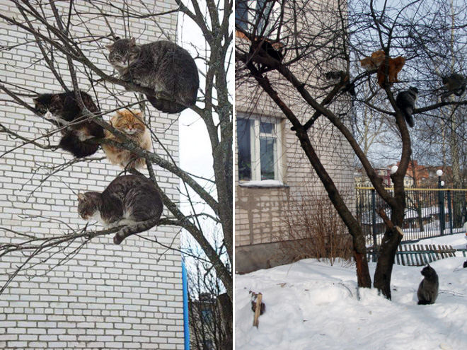 These birds look weird...