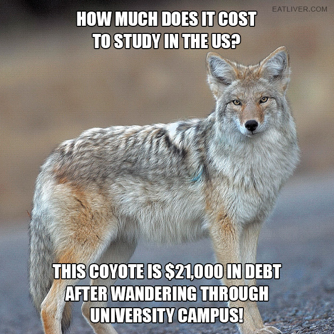 How much does it cost to study in the US? This coyote is $21,000 in debt after wandering through university campus!