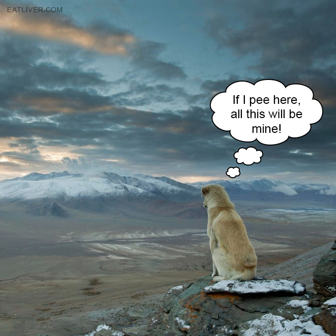 How dogs acquire new territory.