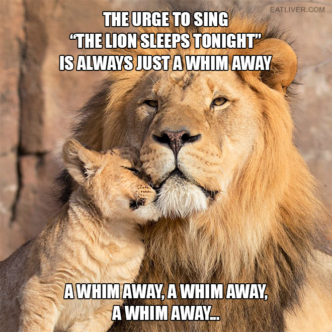 """The urge to sing """"The Lion Sleeps Tonight"""" is always just a whim away... a whim away, a whim away, a whim away..."""