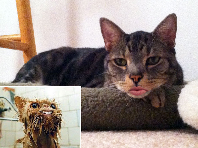 Cats with human mouths are horrifying.