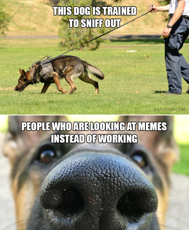 This dog is trained to sniff out people who are looking at memes instead of working.