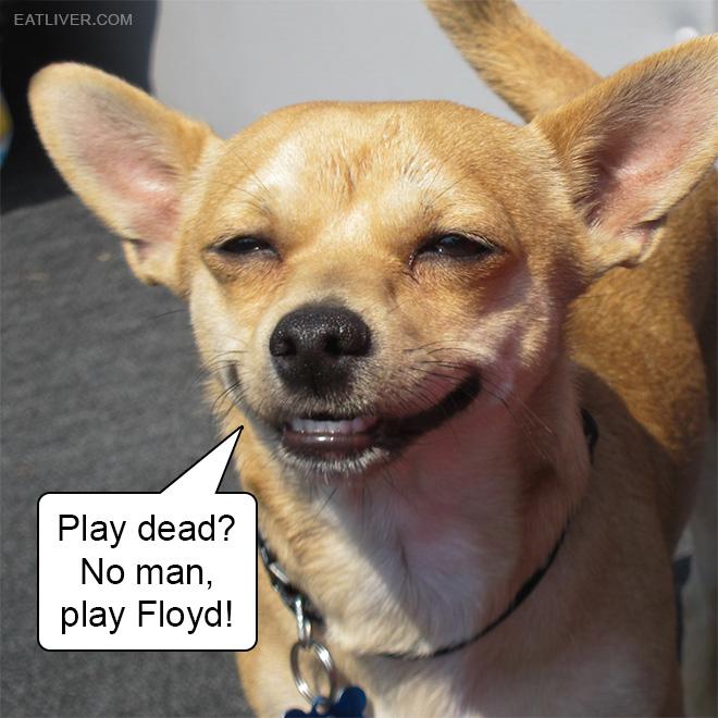 Play dead? No man, play Floyd!